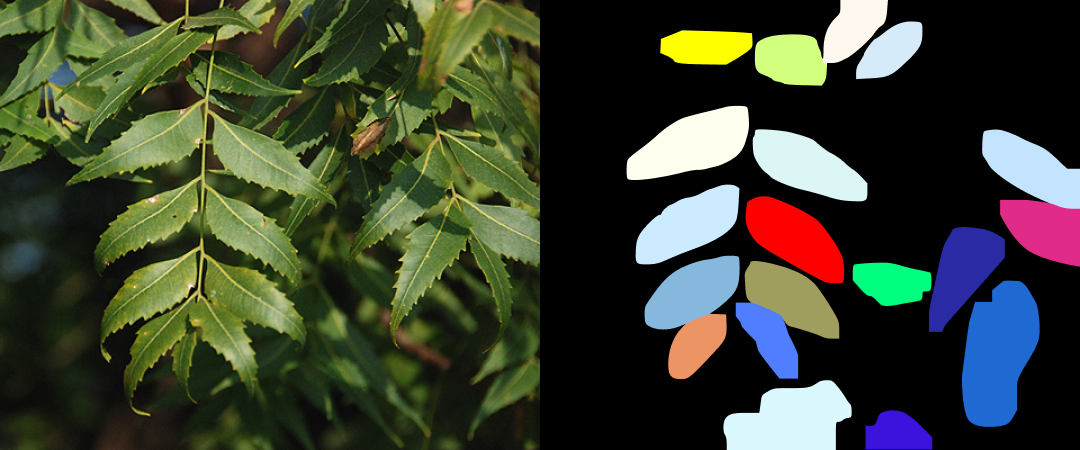 Detected leaves of neem tree with help of instance segmentation